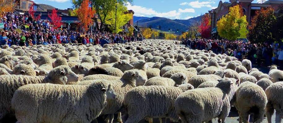 Trailing of the Sheep Festival Recognized